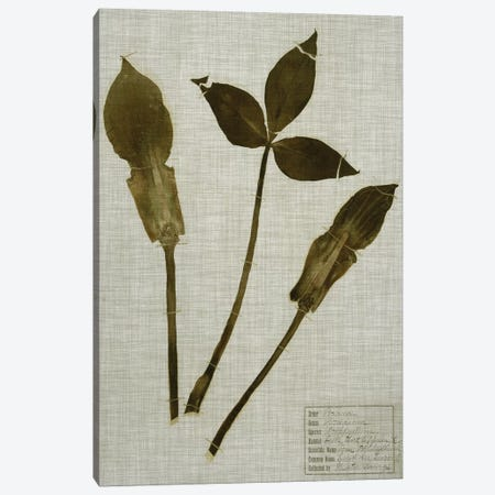 Pressed Leaves On Linen IV Canvas Print #VSN358} by Vision Studio Canvas Art