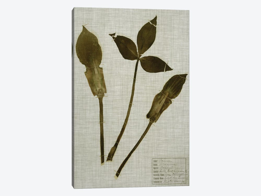 Pressed Leaves On Linen IV by Vision Studio 1-piece Canvas Artwork