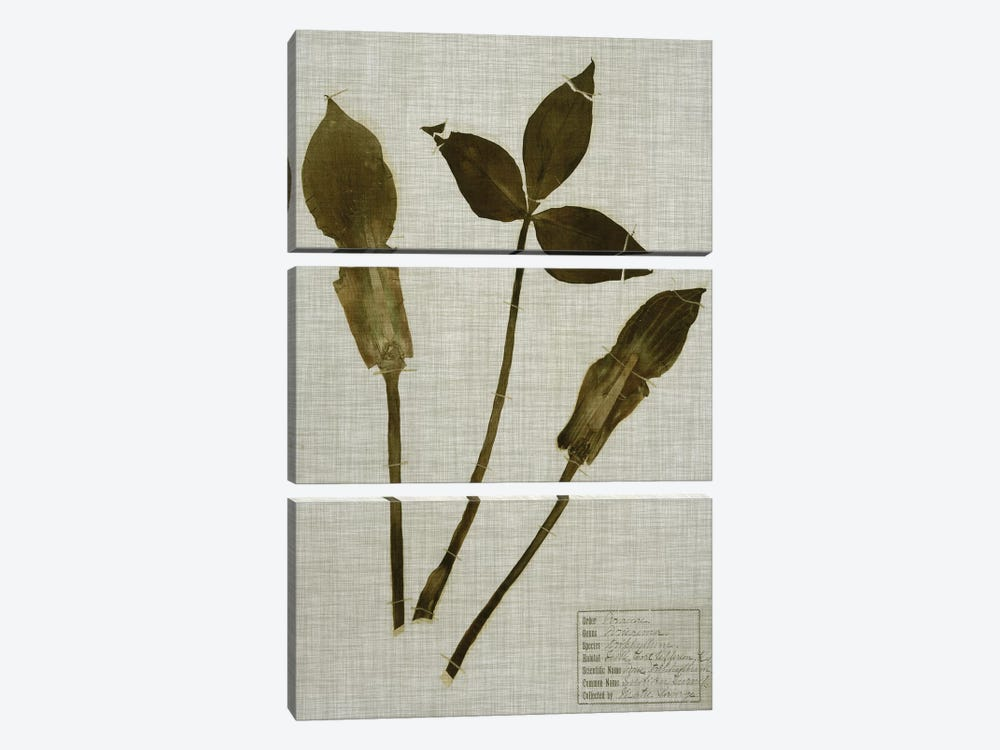 Pressed Leaves On Linen IV by Vision Studio 3-piece Canvas Artwork