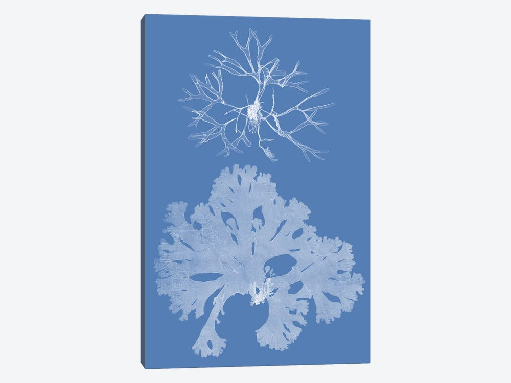 Seaweed Cyanotype III by Vision Studio 1-piece Canvas Artwork