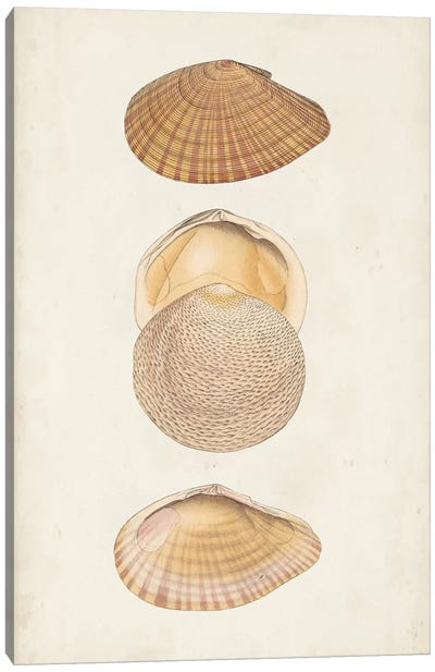 Antiquarian Shell Study I Canvas Art Print