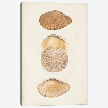 Antiquarian Shell Study I 3-Piece Canvas #VSN386} by Vision Studio Canvas Artwork