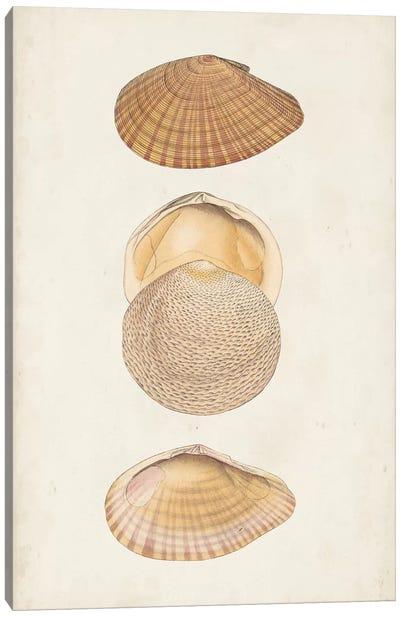 Antiquarian Shell Study I Canvas Art Print