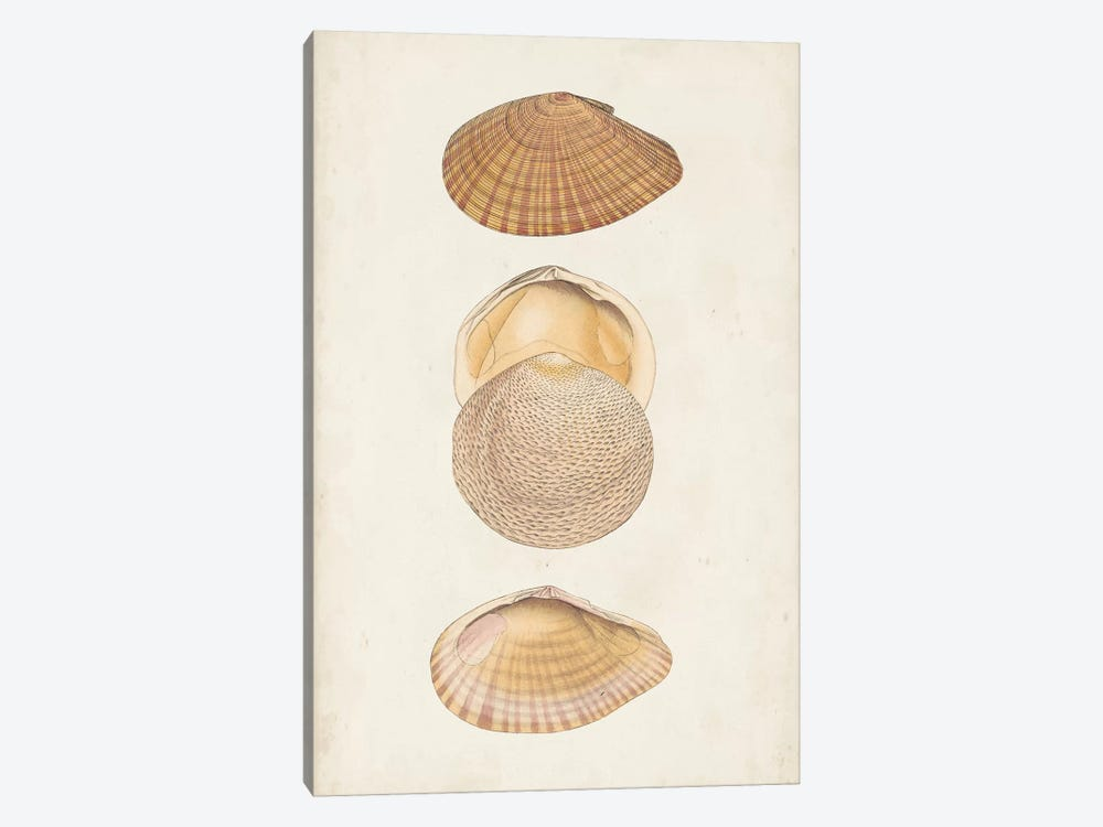 Antiquarian Shell Study I by Vision Studio 1-piece Art Print