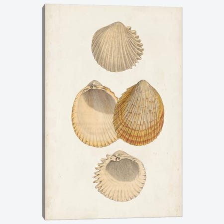 Antiquarian Shell Study II Canvas Print #VSN387} by Vision Studio Canvas Artwork