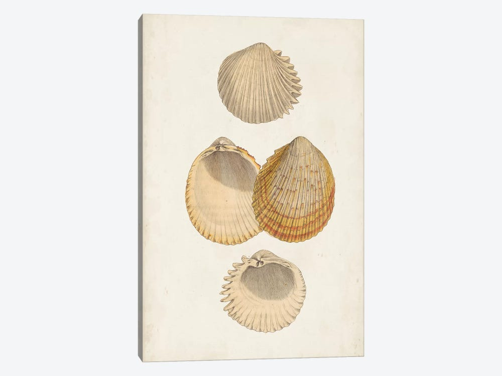 Antiquarian Shell Study II by Vision Studio 1-piece Canvas Wall Art