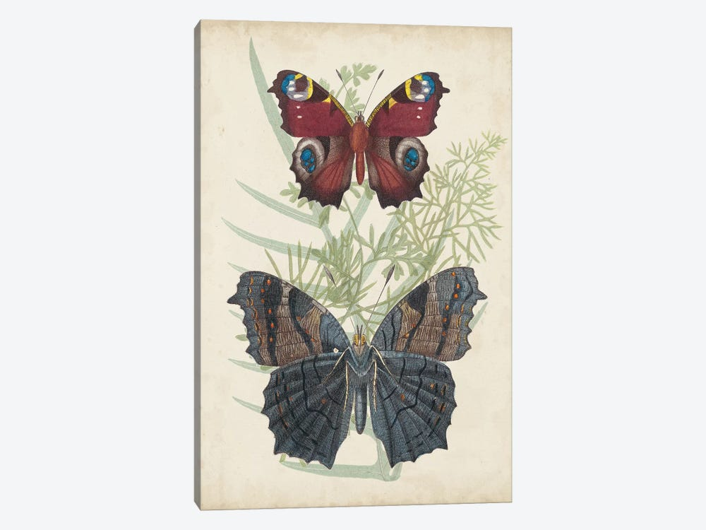 Butterflies & Ferns III by Vision Studio 1-piece Art Print