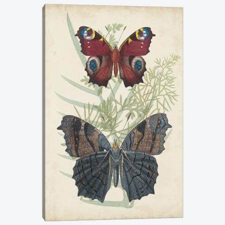 Butterflies & Ferns III Canvas Print #VSN388} by Vision Studio Canvas Art Print