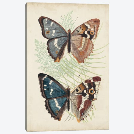 Butterflies & Ferns IV Canvas Print #VSN389} by Vision Studio Canvas Art Print