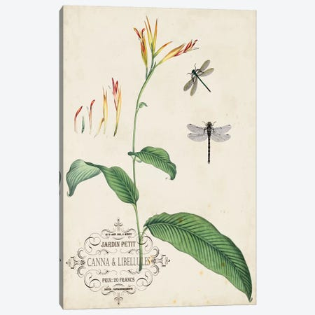 Canna & Dragonflies I Canvas Print #VSN390} by Vision Studio Canvas Art
