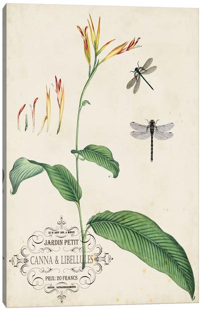 Canna & Dragonflies I Canvas Art Print