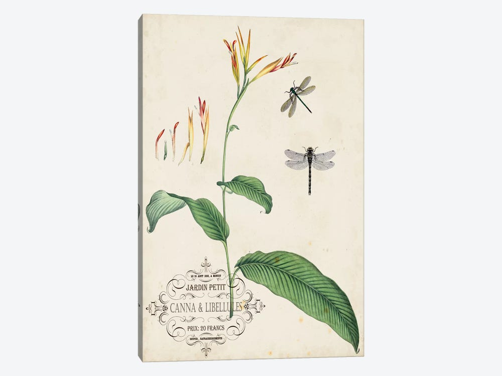 Canna & Dragonflies I by Vision Studio 1-piece Canvas Wall Art