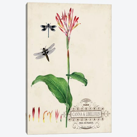 Canna & Dragonflies II Canvas Print #VSN391} by Vision Studio Canvas Wall Art