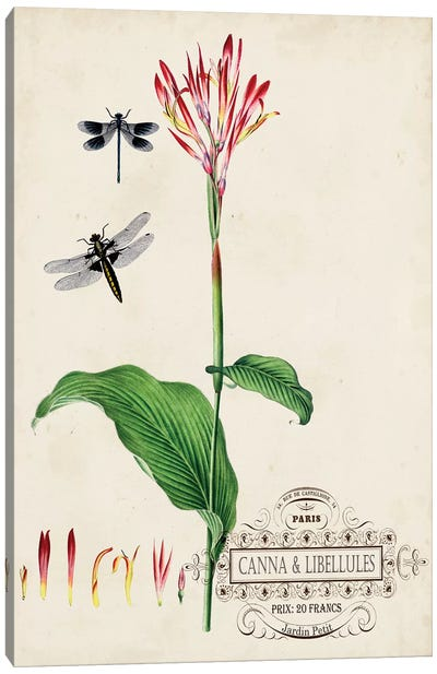 Canna & Dragonflies II Canvas Art Print