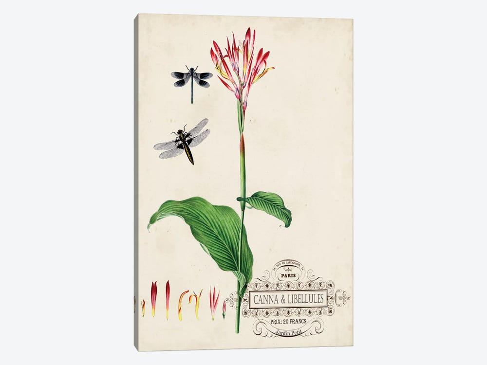 Canna & Dragonflies II by Vision Studio 1-piece Canvas Art Print