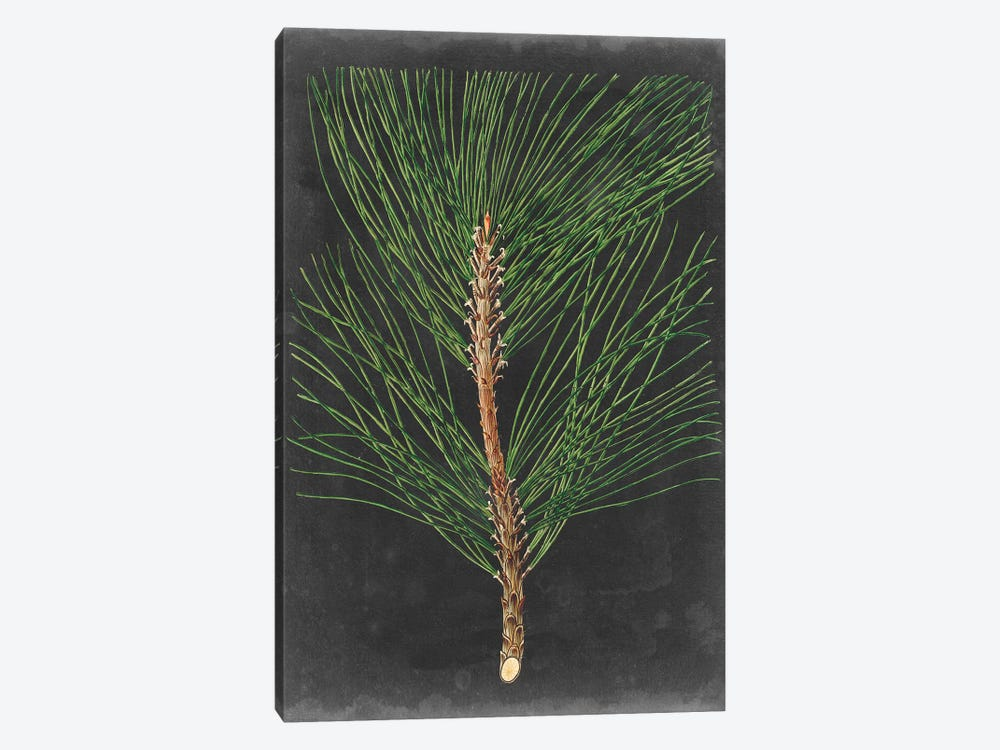 Dramatic Pine I by Vision Studio 1-piece Canvas Art