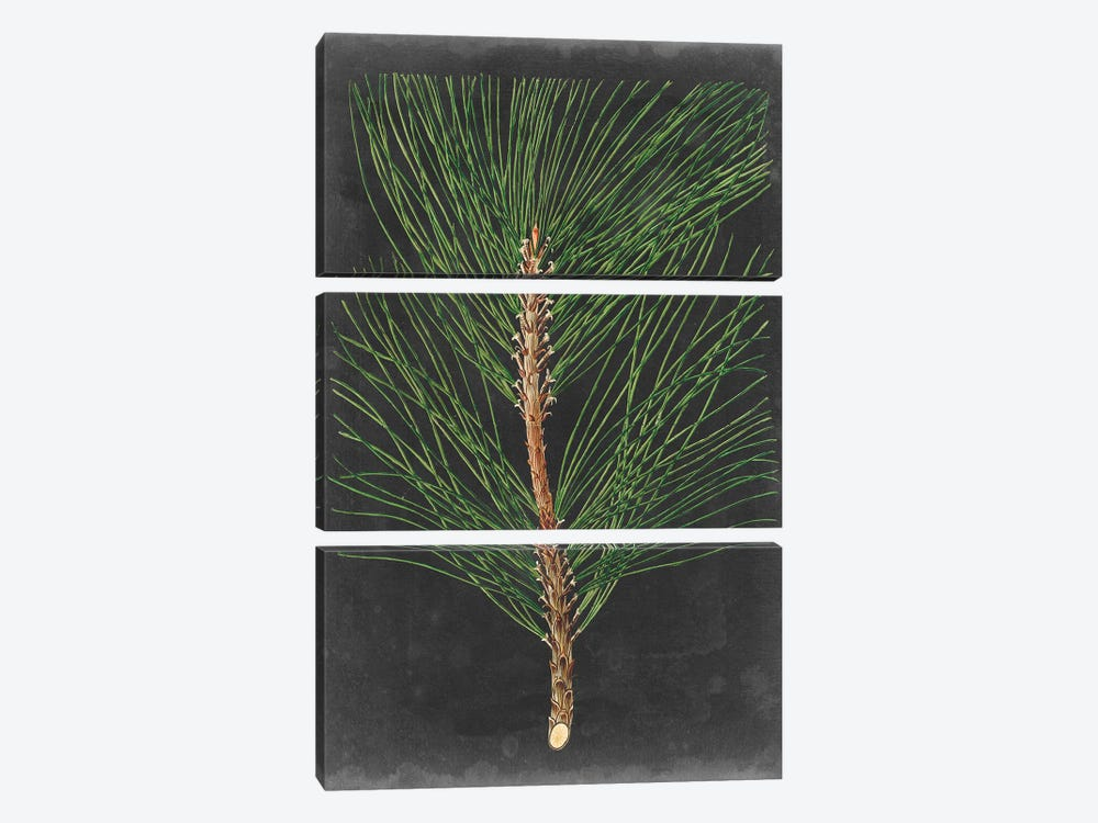 Dramatic Pine I by Vision Studio 3-piece Canvas Artwork