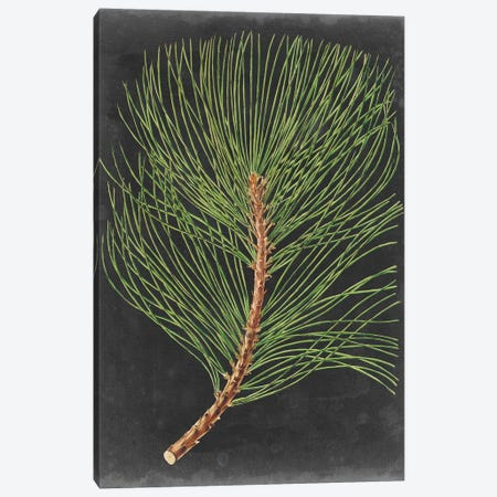 Dramatic Pine III Canvas Print #VSN398} by Vision Studio Canvas Artwork