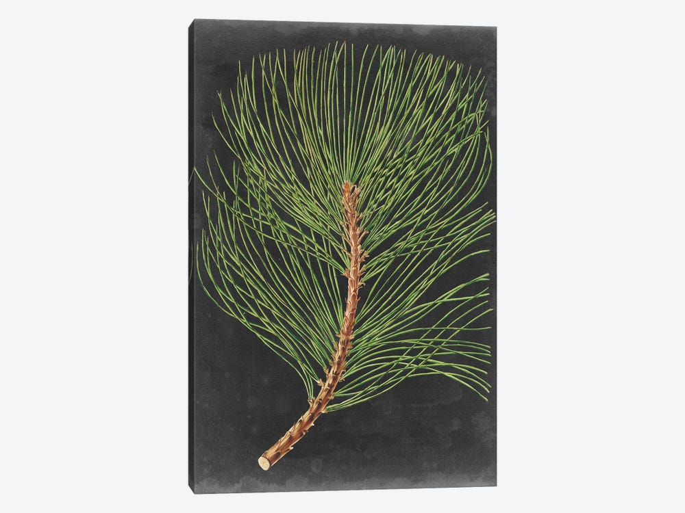 Dramatic Pine III by Vision Studio 1-piece Canvas Wall Art