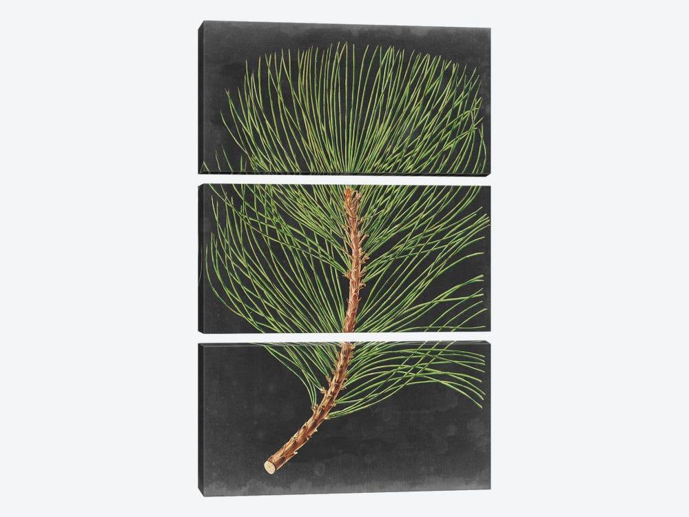 Dramatic Pine III by Vision Studio 3-piece Canvas Artwork