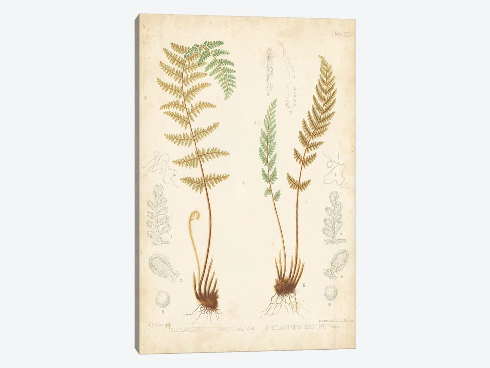 Fern Study I by Vision Studio 1-piece Art Print