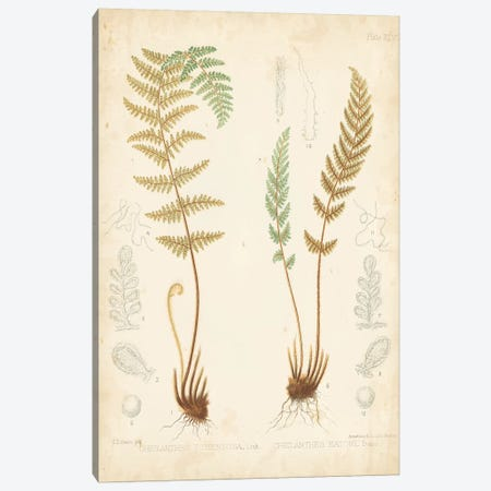 Fern Study I Canvas Print #VSN399} by Vision Studio Canvas Art