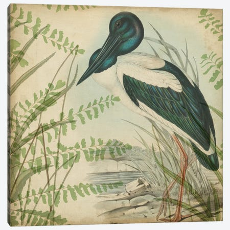 Heron & Ferns I Canvas Print #VSN401} by Vision Studio Canvas Artwork