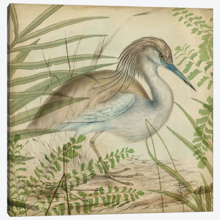 Heron & Ferns II Canvas Print #VSN402} by Vision Studio Canvas Artwork