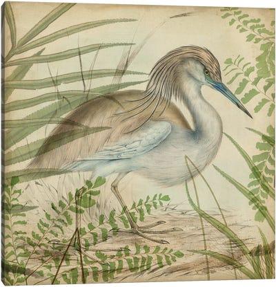 Heron & Ferns II Canvas Art Print