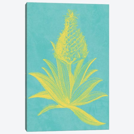 Pineapple Frais I Canvas Print #VSN403} by Vision Studio Canvas Art