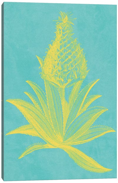 Pineapple Frais I Canvas Art Print