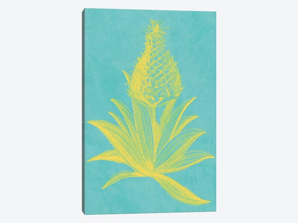 Pineapple Frais I by Vision Studio 1-piece Canvas Art Print