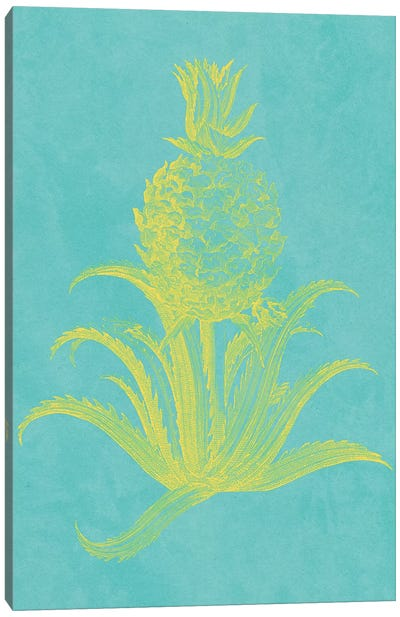 Pineapple Frais II Canvas Art Print