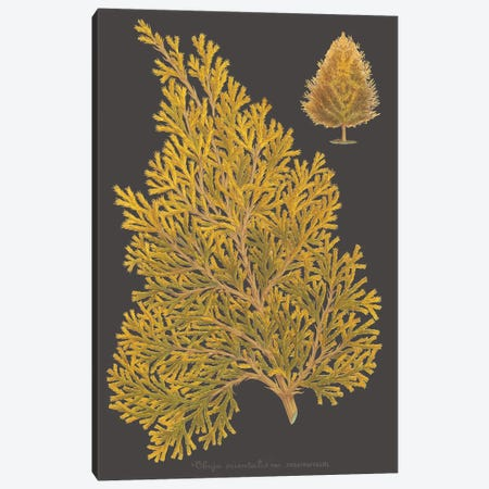 Trees & Leaves III Canvas Print #VSN406} by Vision Studio Canvas Print