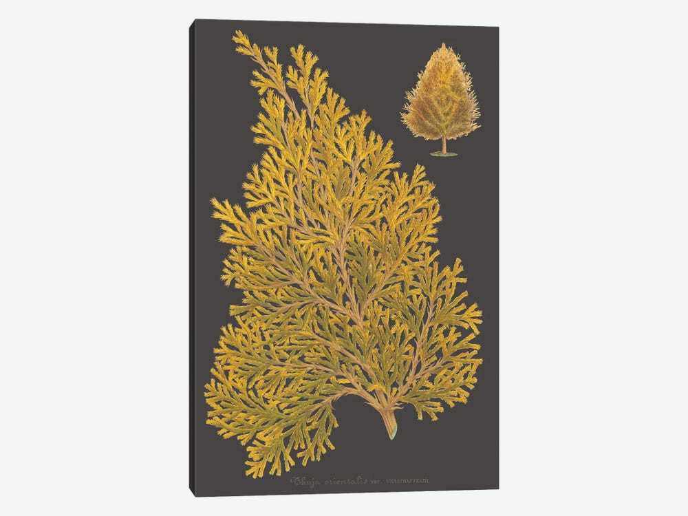 Trees & Leaves III by Vision Studio 1-piece Canvas Art