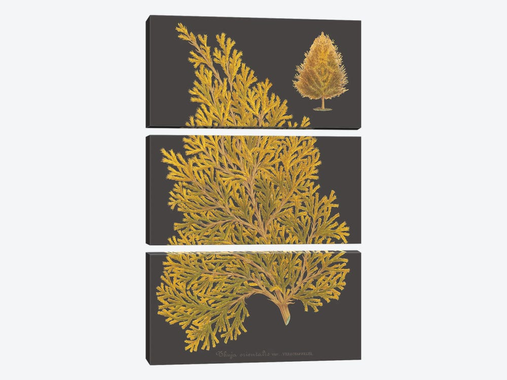 Trees & Leaves III by Vision Studio 3-piece Canvas Artwork