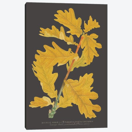 Trees & Leaves IV Canvas Print #VSN407} by Vision Studio Canvas Print