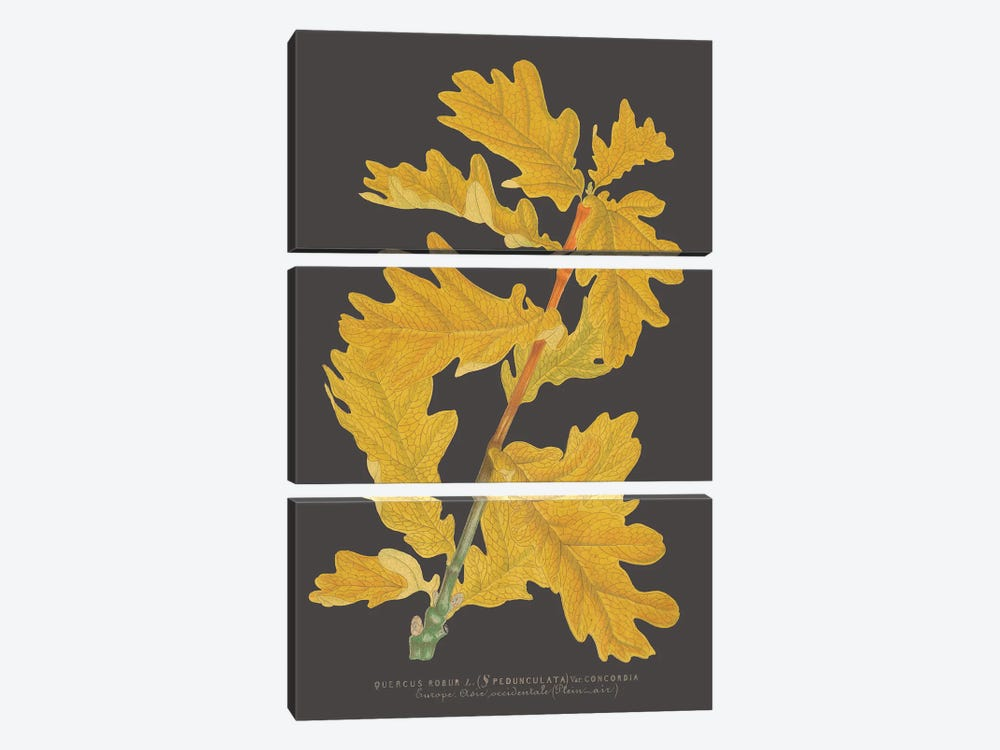 Trees & Leaves IV by Vision Studio 3-piece Canvas Print
