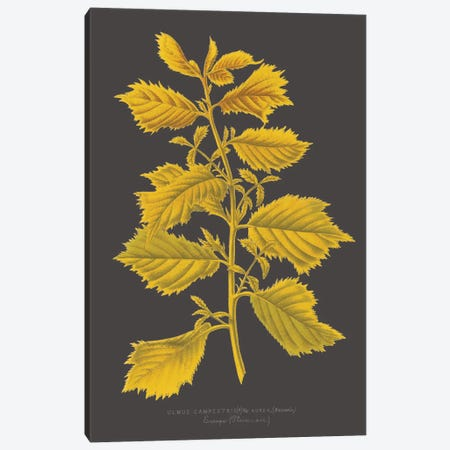Trees & Leaves V Canvas Print #VSN408} by Vision Studio Canvas Artwork