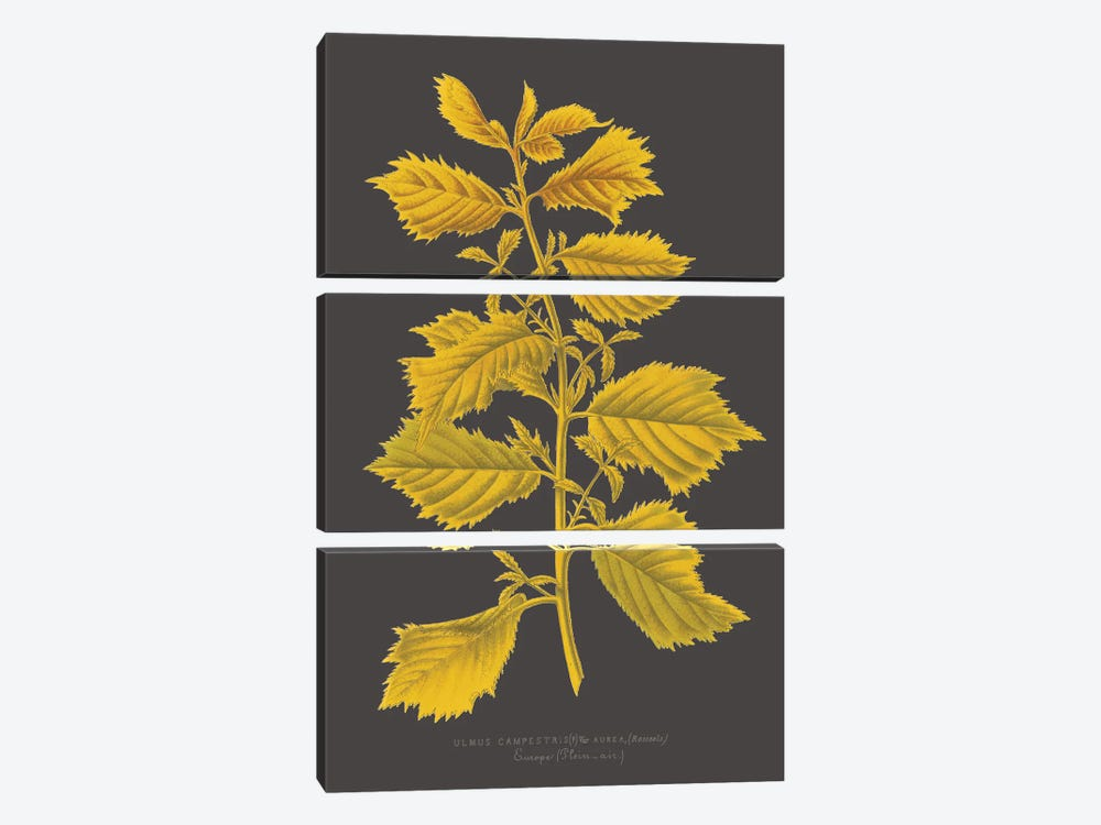 Trees & Leaves V by Vision Studio 3-piece Canvas Art