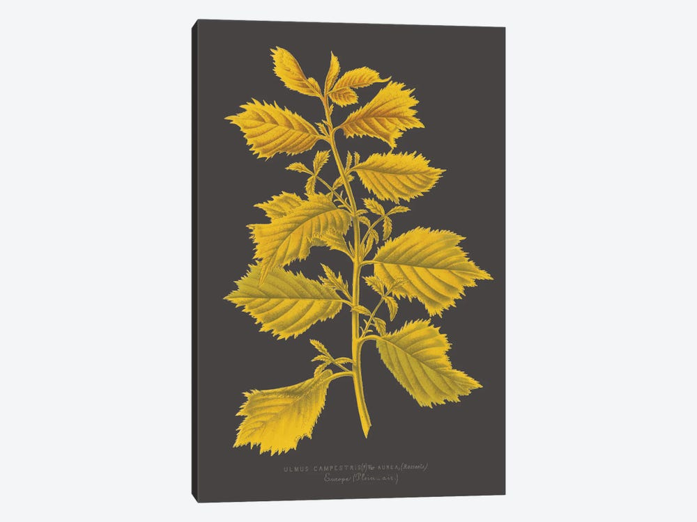 Trees & Leaves V by Vision Studio 1-piece Canvas Art