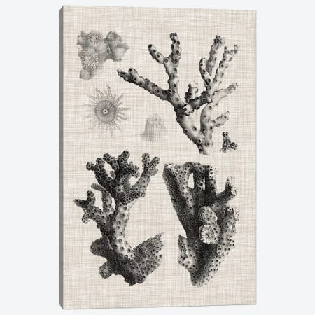 Coral Specimen I Canvas Print #VSN417} by Vision Studio Canvas Wall Art
