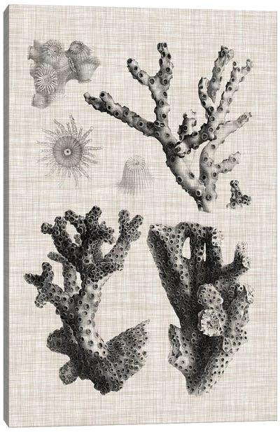 Coral Specimen I Canvas Art Print