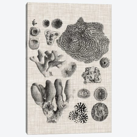 Coral Specimen II Canvas Print #VSN418} by Vision Studio Canvas Print
