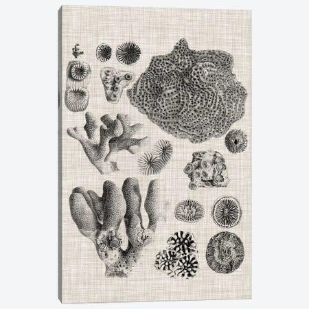 Coral Specimen II Canvas Print #VSN418} by Vision Studio Canvas Print