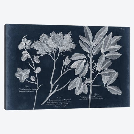 Foliage On Navy VI Canvas Print #VSN428} by Vision Studio Canvas Wall Art
