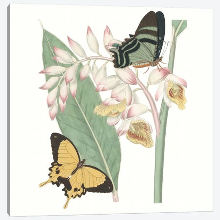 Les Papillons I Canvas Print #VSN430} by Vision Studio Canvas Print