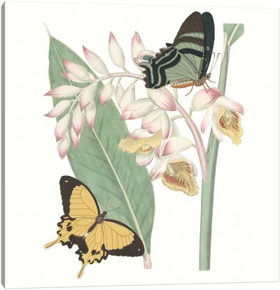 Les Papillons I Canvas Art Print