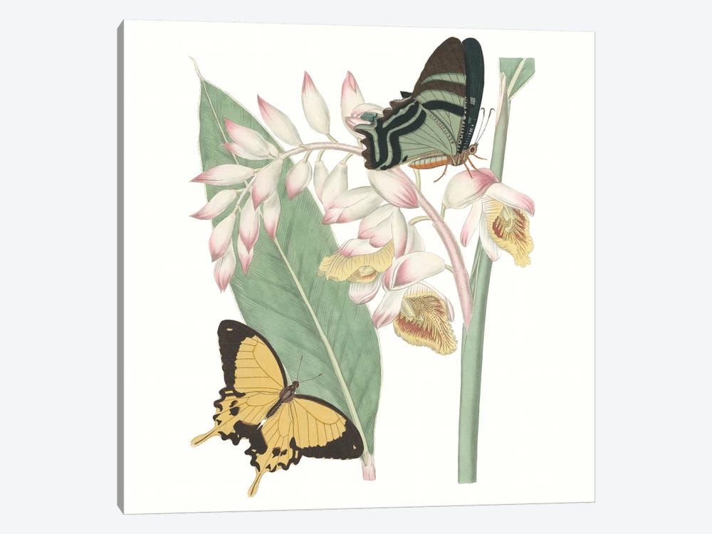 Les Papillons I 1-piece Canvas Art Print