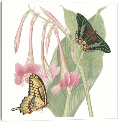 Les Papillons II Canvas Art Print
